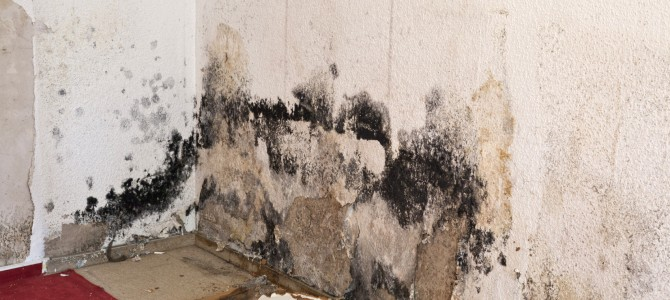 Is Mold Inside a Home Bad for Your Health?